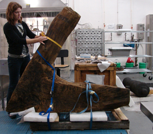 Conservator measures a dogshore preparing it to be transported.