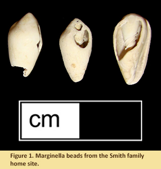 Figure 1. Marginella beads from the Smith family home site.